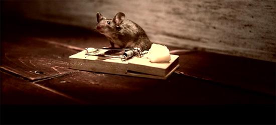 【その他】 ネズミが主人公 『Seriously Strong Cheddar』チーズのCM