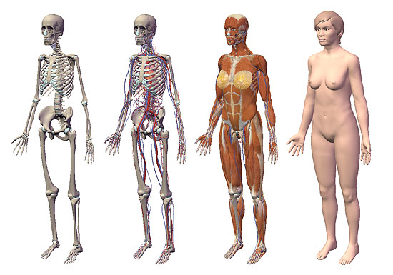 【3DCG】 FLASHでグリグリ回せる 3D人体模型『VISIBLE BODY』