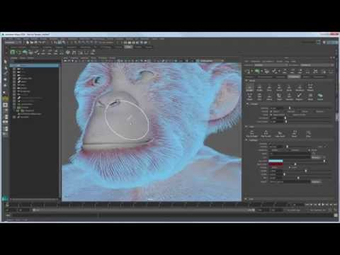 Expert over the shoulder: Grooming chimpanzee fur with XGen - Part 1