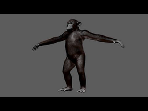 Expert over the shoulder: Grooming chimpanzee fur with XGen - Part 2