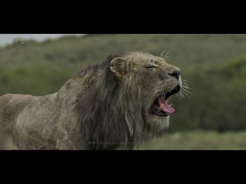 MPC Film - The Lion King VFX Breakdown