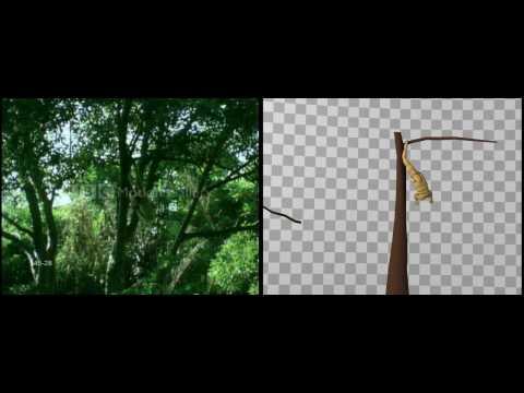 Motion Reference - Gibbon