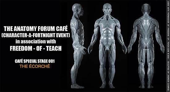 人体の筋肉の構造がよく分かる写真