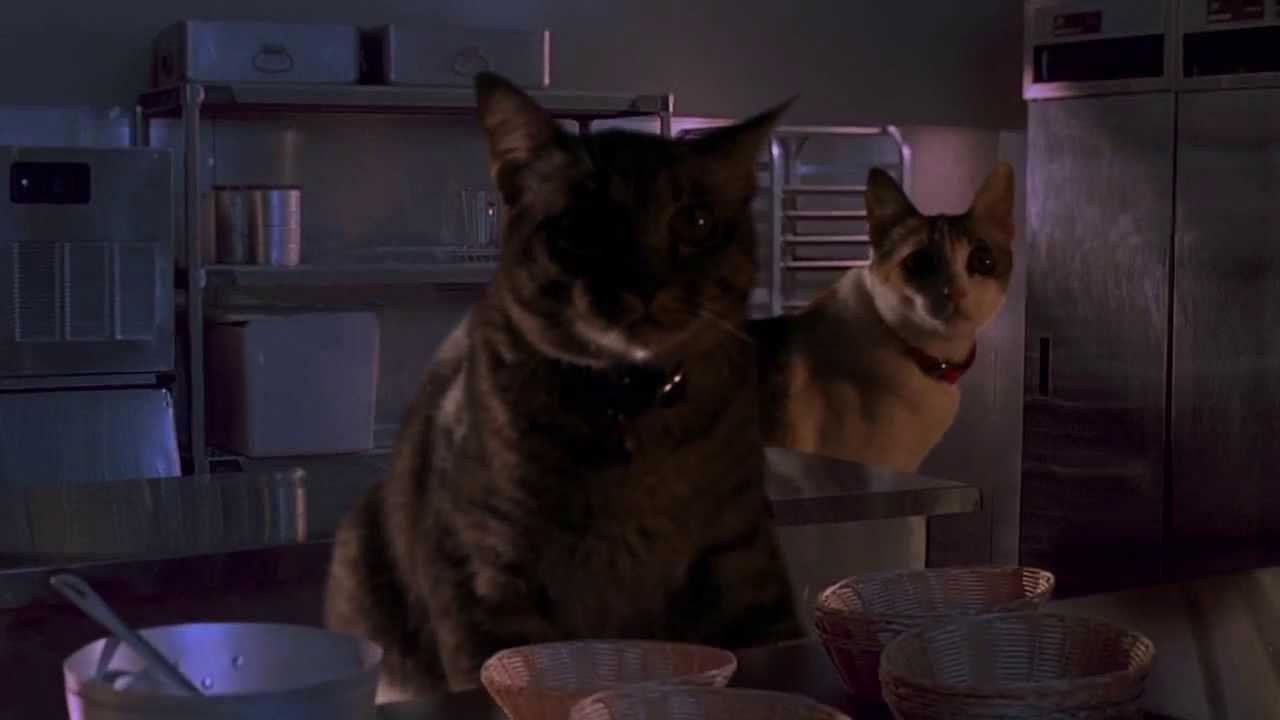 【何故やろうと思ったのか】映画『ジュラシックパーク』のキッチン襲撃シーンの恐竜を猫に置き換えてみた