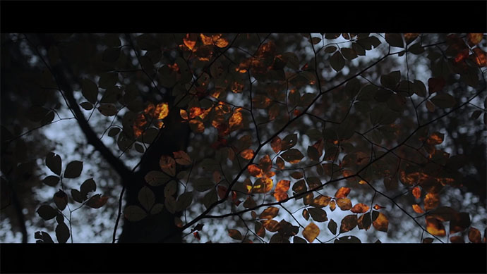 150104_projections-in-the-forest_01