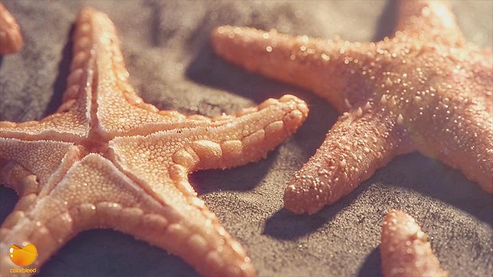 150419_starfish_02