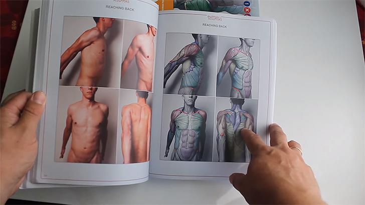 筋肉の付き方を色分けで分かりやすく掲載