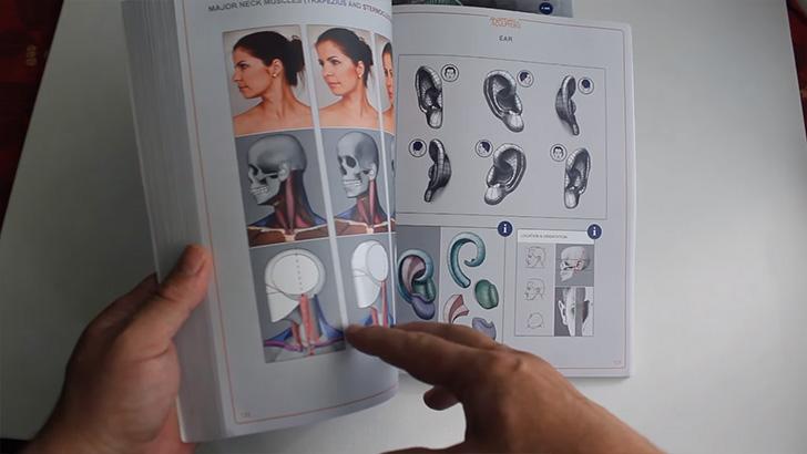 頭部の構造や、複雑そうな耳の構造も分かりやすく分離して掲載