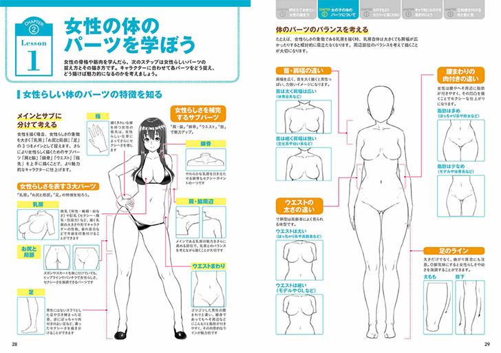 女性の体のパーツ解説。文系キャラ、モデル、体育会系とタイプ別にも解説。
