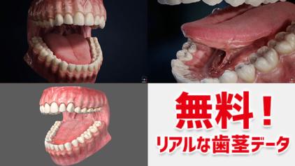 歯茎 の CG モデルデータが無料でダウンロード出来るぞー!