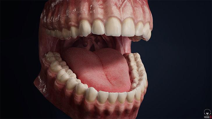 ダウンロード出来る 歯茎 のCGモデルの全体像